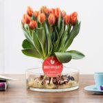Bulb Bouquet tulpenschoof