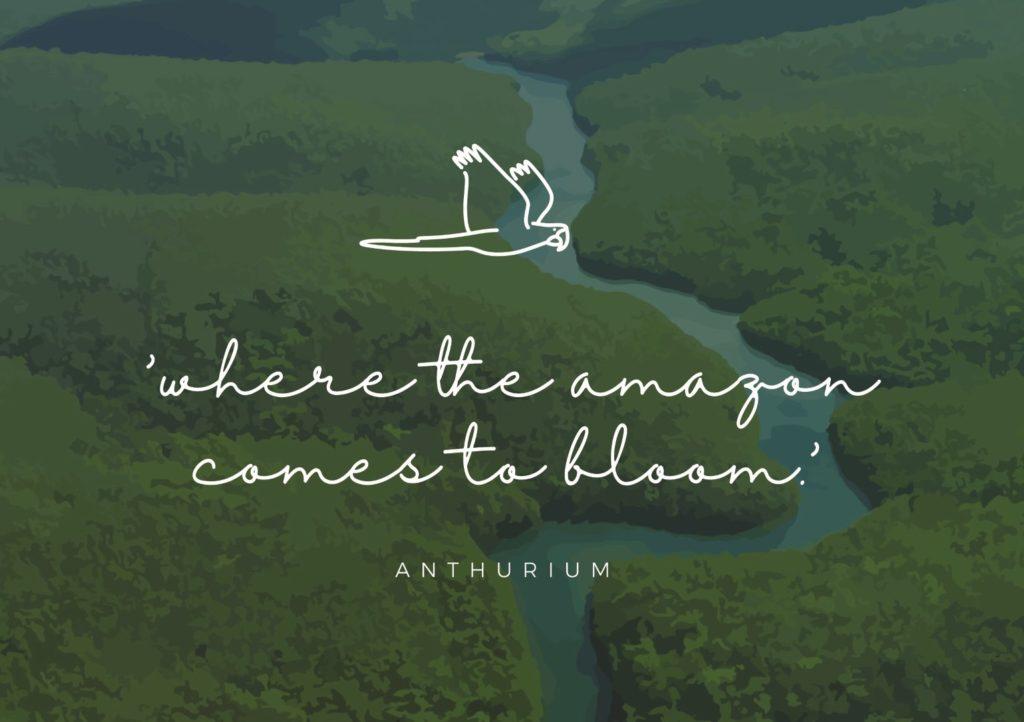 Het nieuwe logo en de nieuwe slogan van Amazone Plants: 'where the amazon comes to bloom'
