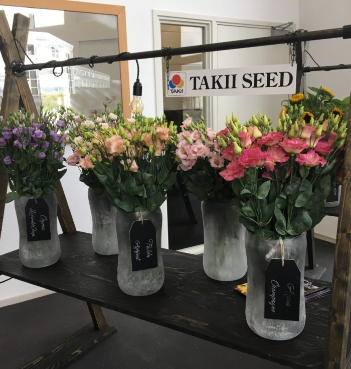 Brassica's van Takii op het presentatiemeubel.